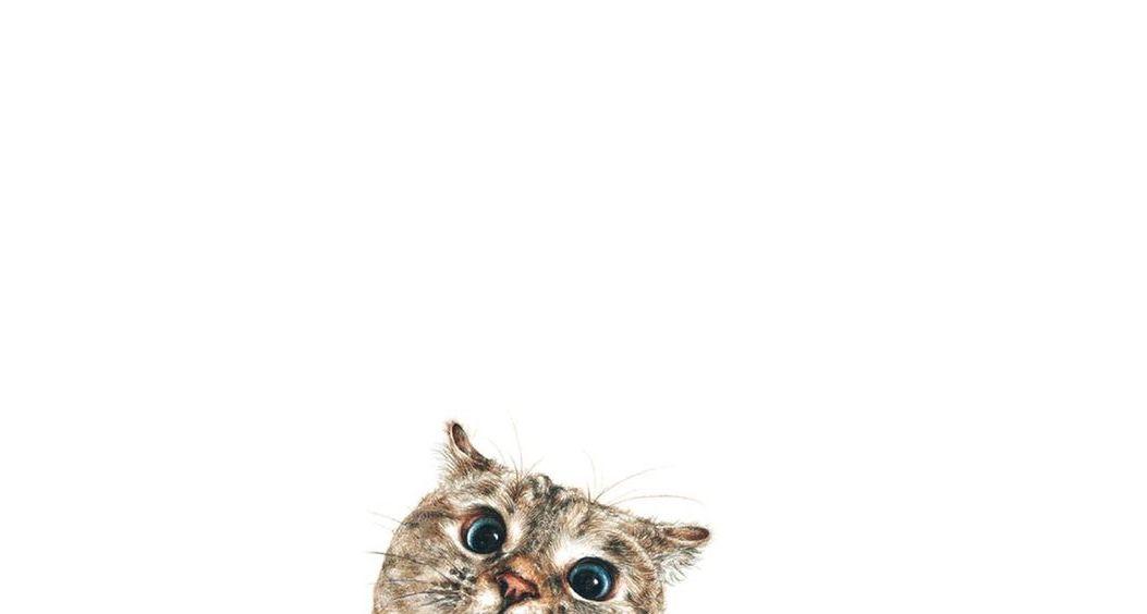 Gato // Desenho // Imagem // Fofo // Curioso // Cute // <3