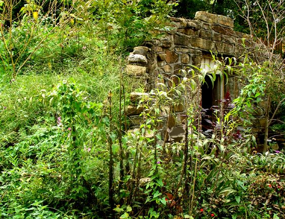 green roof for root cellar or wine cellar   Root cellar ...