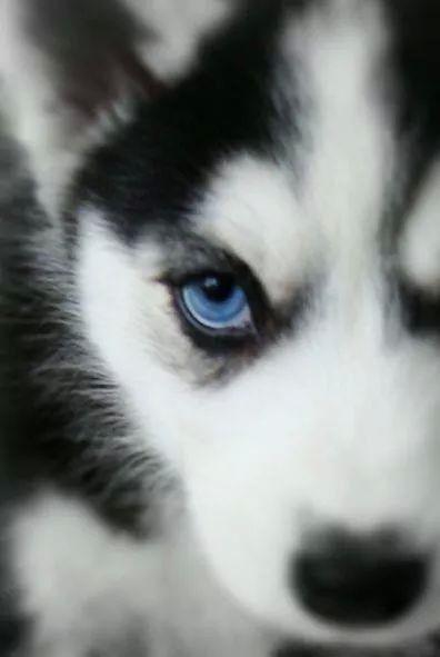 Stunning eyes! | Mijn ideeën | Pinterest | Animales, Mascotas y Lobos