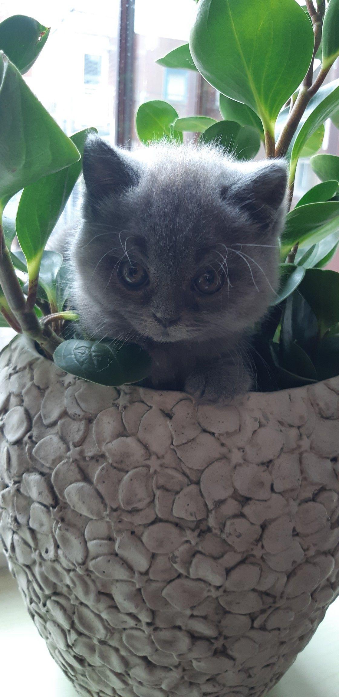 Fluffy Kittens For Sale Melbourne