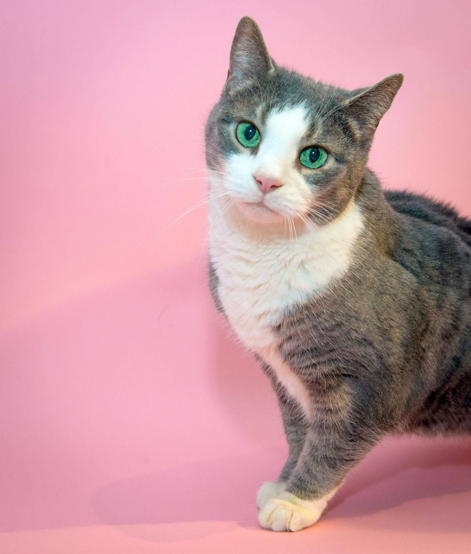 Tiffany Hagler Geard Photography Adopt Me Cats Pets Cats And Kittens