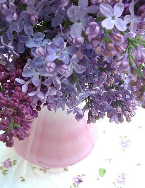 Love The Smell Of Lilacs Beautiful Flowers Pretty Flowers Purple Flowers
