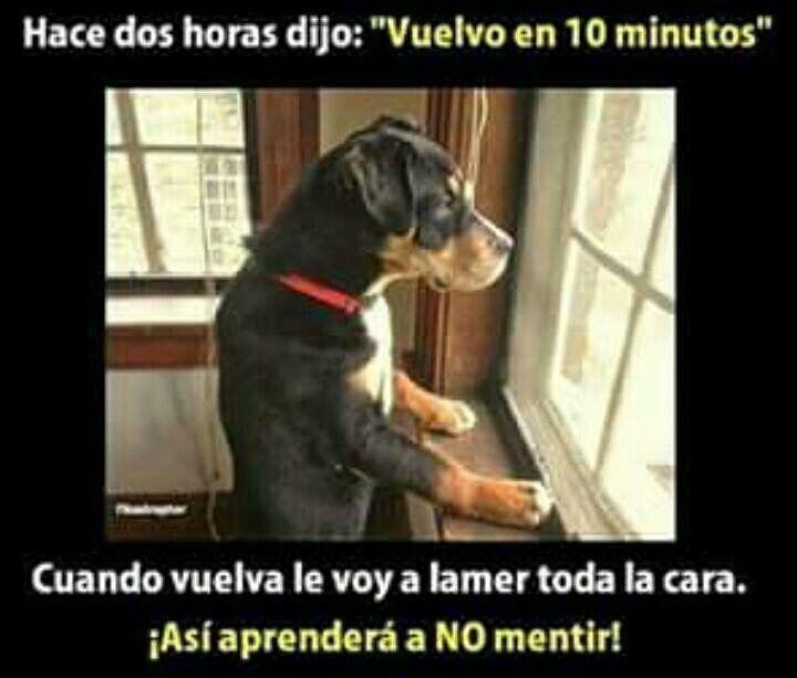 Auto Accident Attorney Memes Mega Memeces Perros Frases Perros Graciosos Chistes De Perros