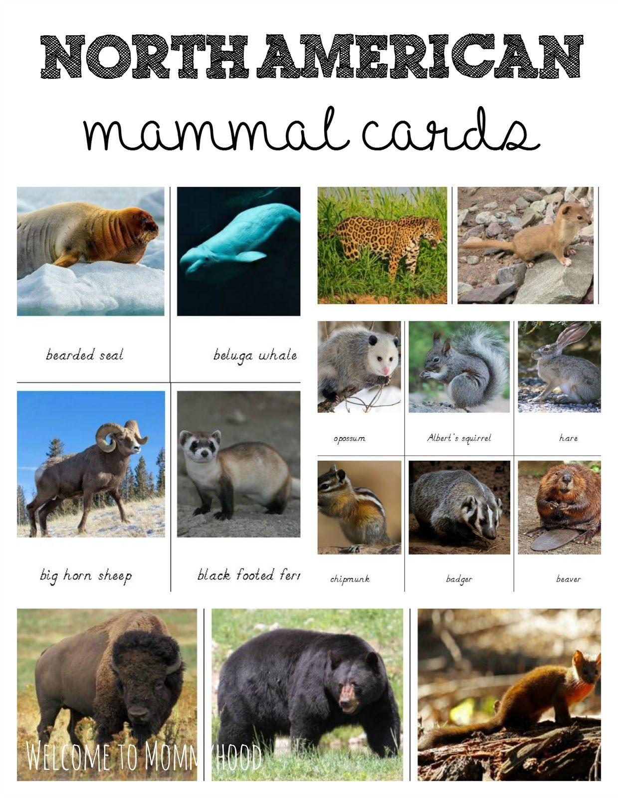 Free printables north american animals 3 part cards by welcome to free printables north american animals 3 part cards by welcome to mommyhood freeprintables sciox Images