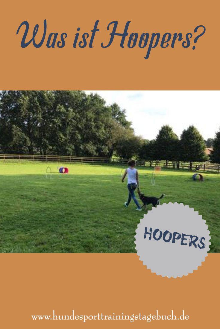 Wie sieht der Hundesport Hoopers aus? (mit Bildern