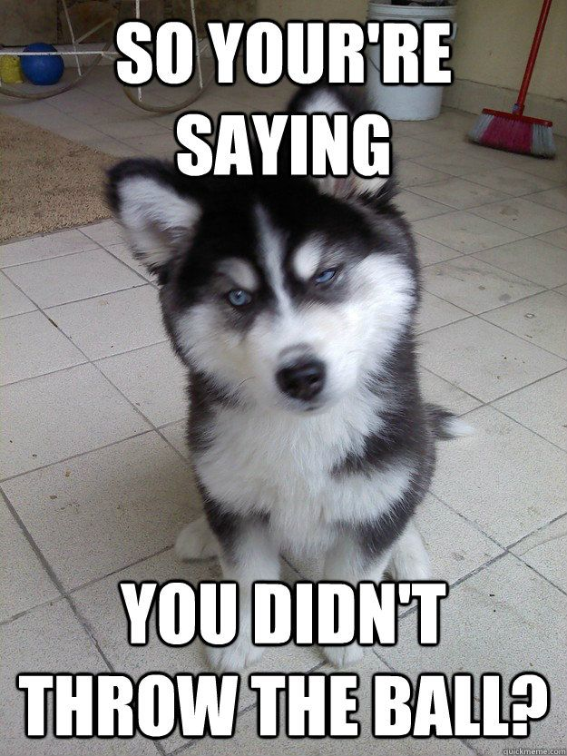 Dog Meme Genuinely Surprised Dog Meme Dog Meme 4 Cute Animal Memes Dog Quotes Funny Cute Animals With Funny Captions