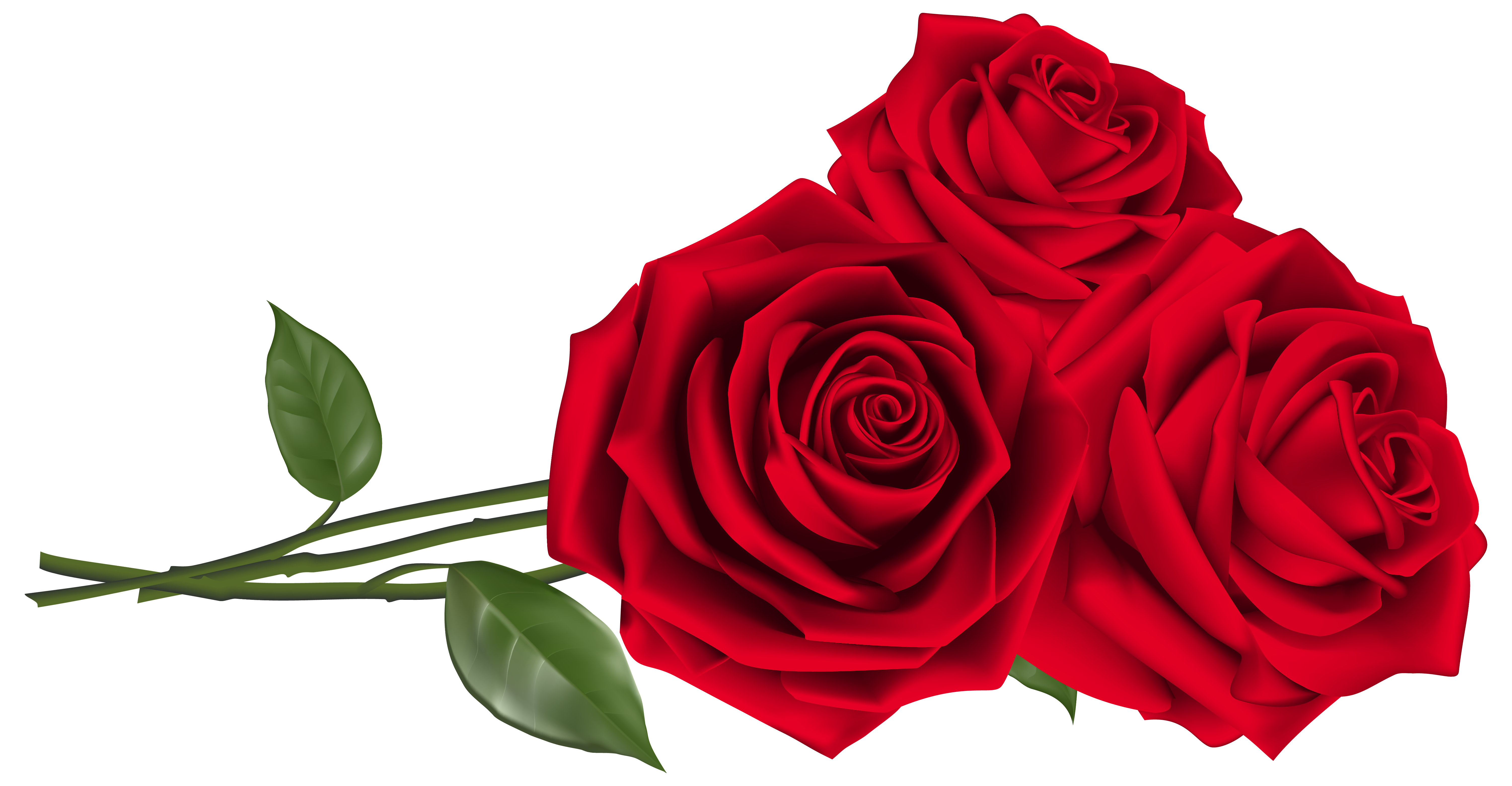 Three Red Roses PNG Clipart Image Rosas, Rosas rojas, Flores