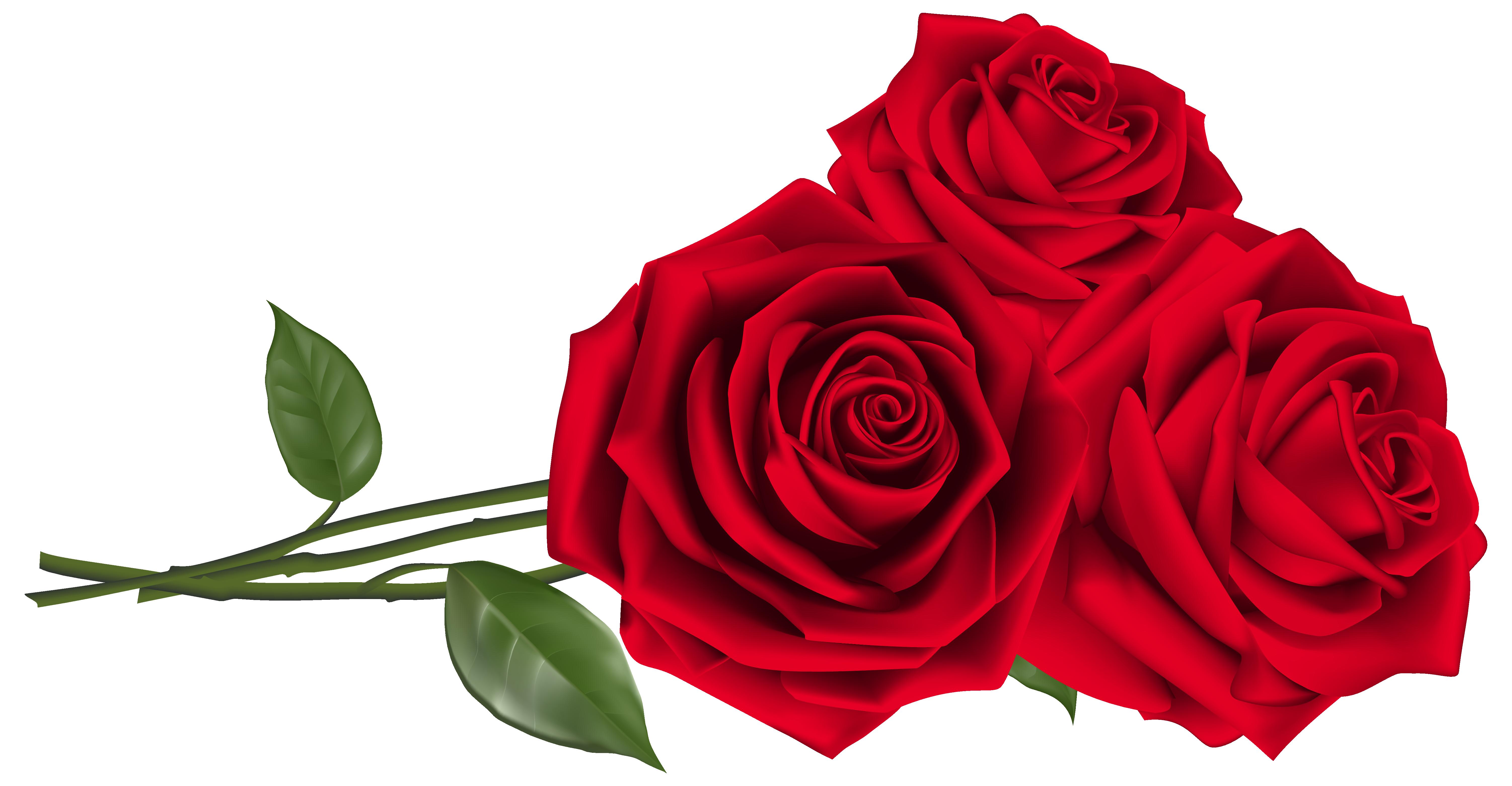 Roses Jpg 6007 3124 Red Roses Beautiful Red Roses Red Rose Petals