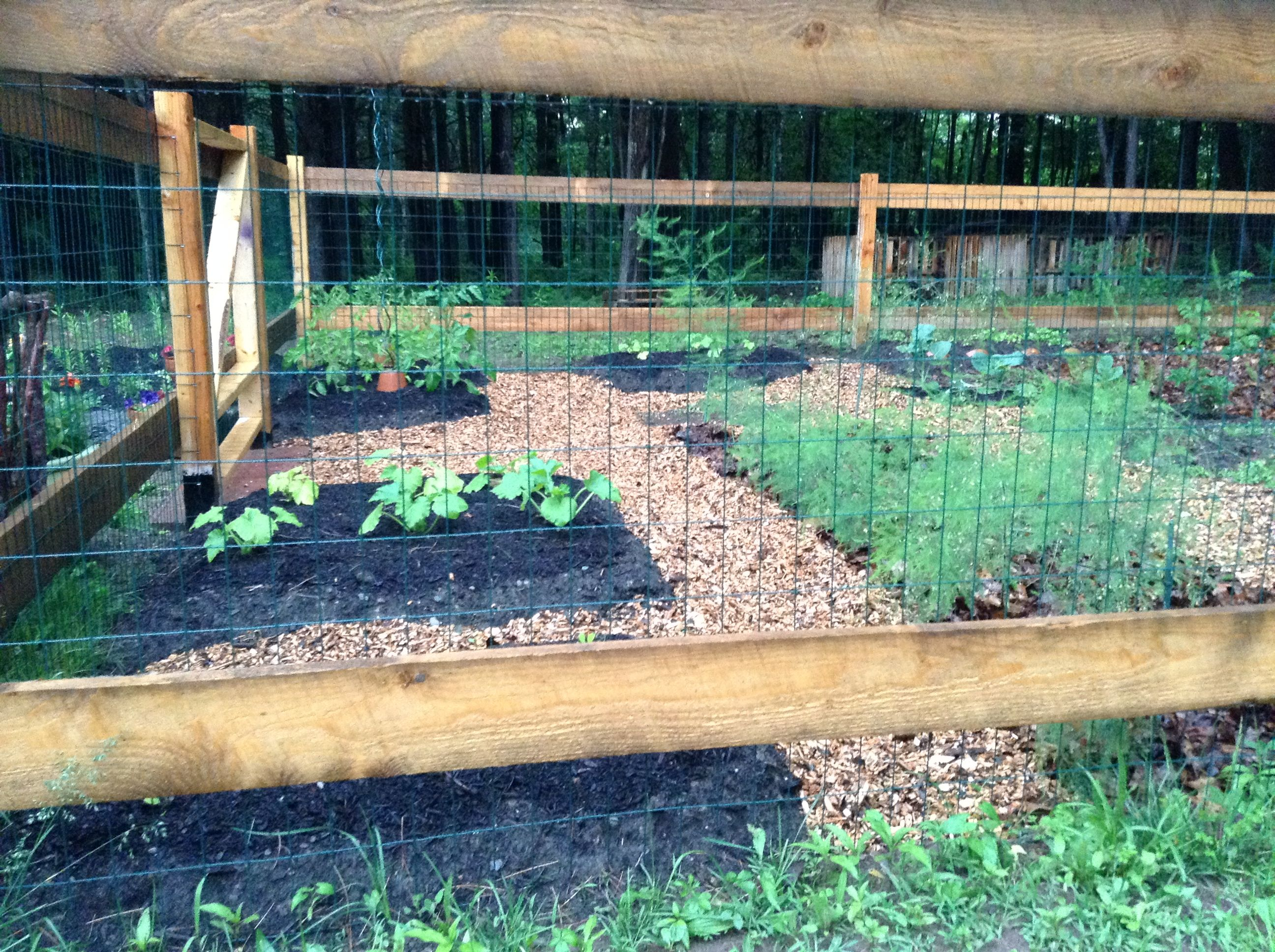 My vegetable garden with wood chip paths beautiful vegetable gardens pinterest vegetable for Wood chip mulch vegetable garden