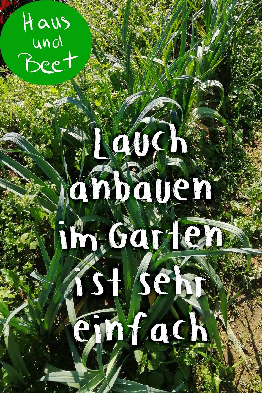 Lauch – Porree aus dem Garten in deine Küche - Haus und Beet