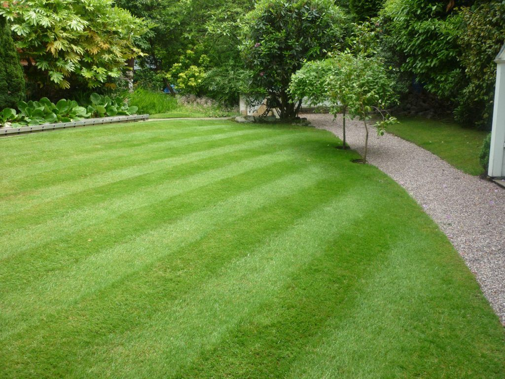 A Gallery Of Beautiful Lawns With Images Lawn Treatment