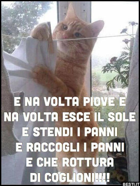 Immagini Divertenti Foto Barzellette Video Immagini Whatsapp