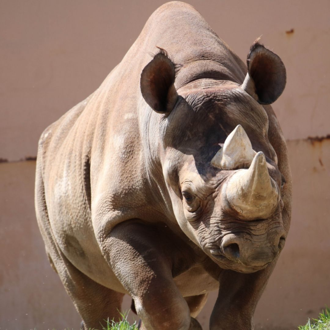 Happy World Rhino Day! Join us (and Rudy the rhino) for
