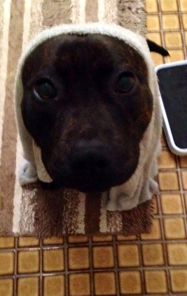 Bath time for Bailey