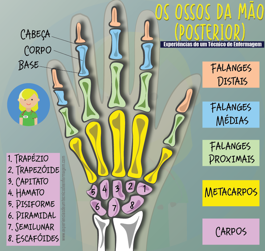 Os Ossos da mão: Conhecendo a sua Anatomia | AUXILIAR DE ENFERMERÍA ...