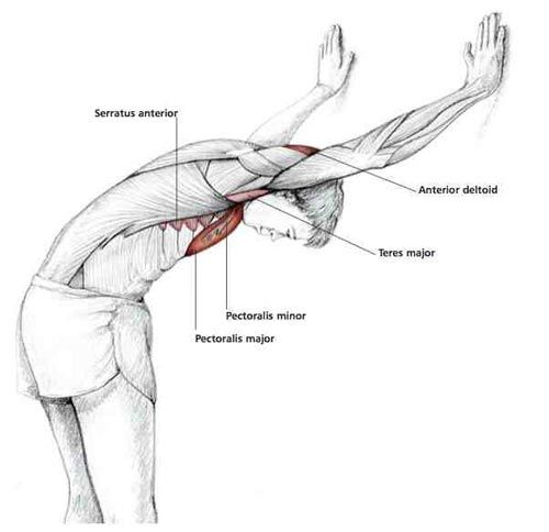 Bent Over Chest Stretch