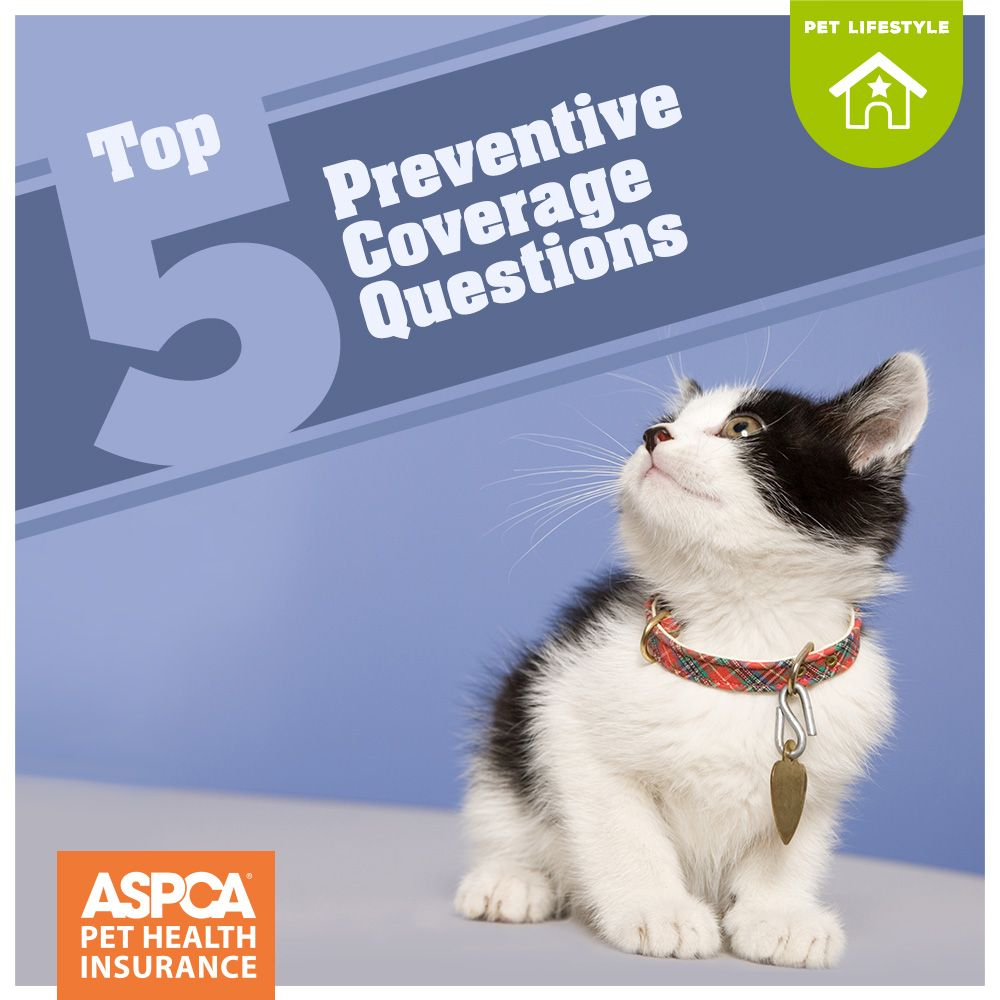 Top 5 Preventive Care Coverage Questions Embrace Pet Insurance