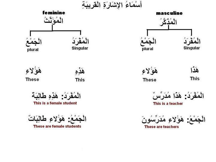 Pin By Sharp Cookie On Learning Arabic Learning Arabic Teach Arabic Plurals
