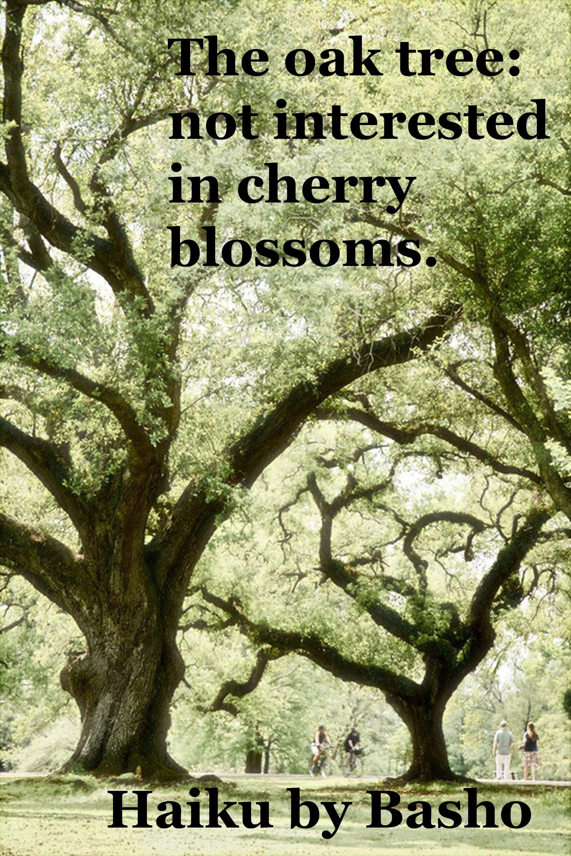 The Oak Tree Not Interested In Cherry Blossoms Haiku By Basho Arboles Arboles Y Arbustos Hermosos Paisajes