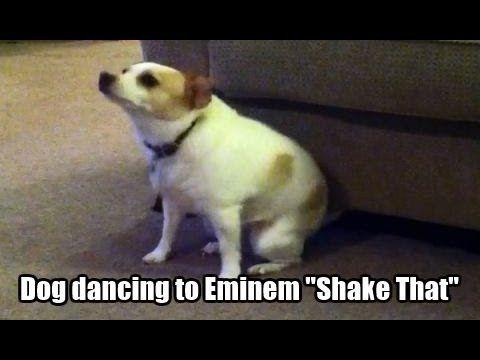 Dancing Dog Perro Bailando Danse Chien Youtube Perro Bailando