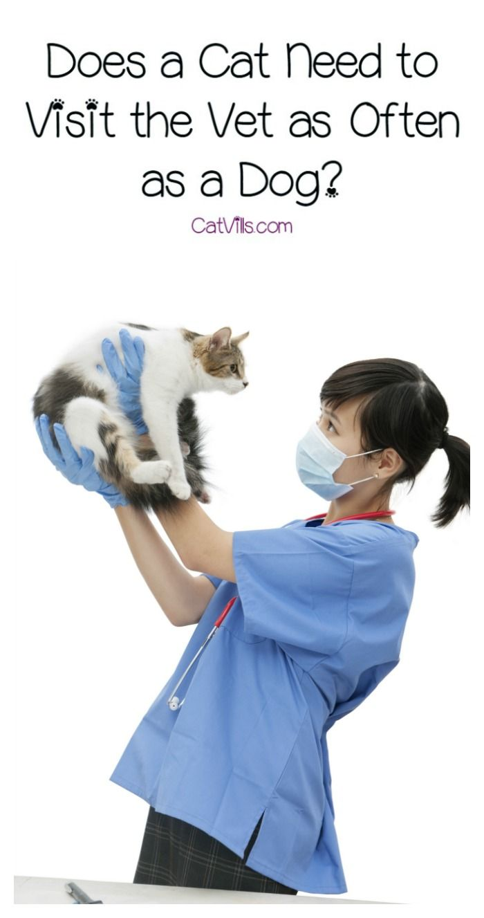 Does A Cat Need To Visit The Vet As Often As A Dog Catvills Cat Parenting Cat Vet Vets