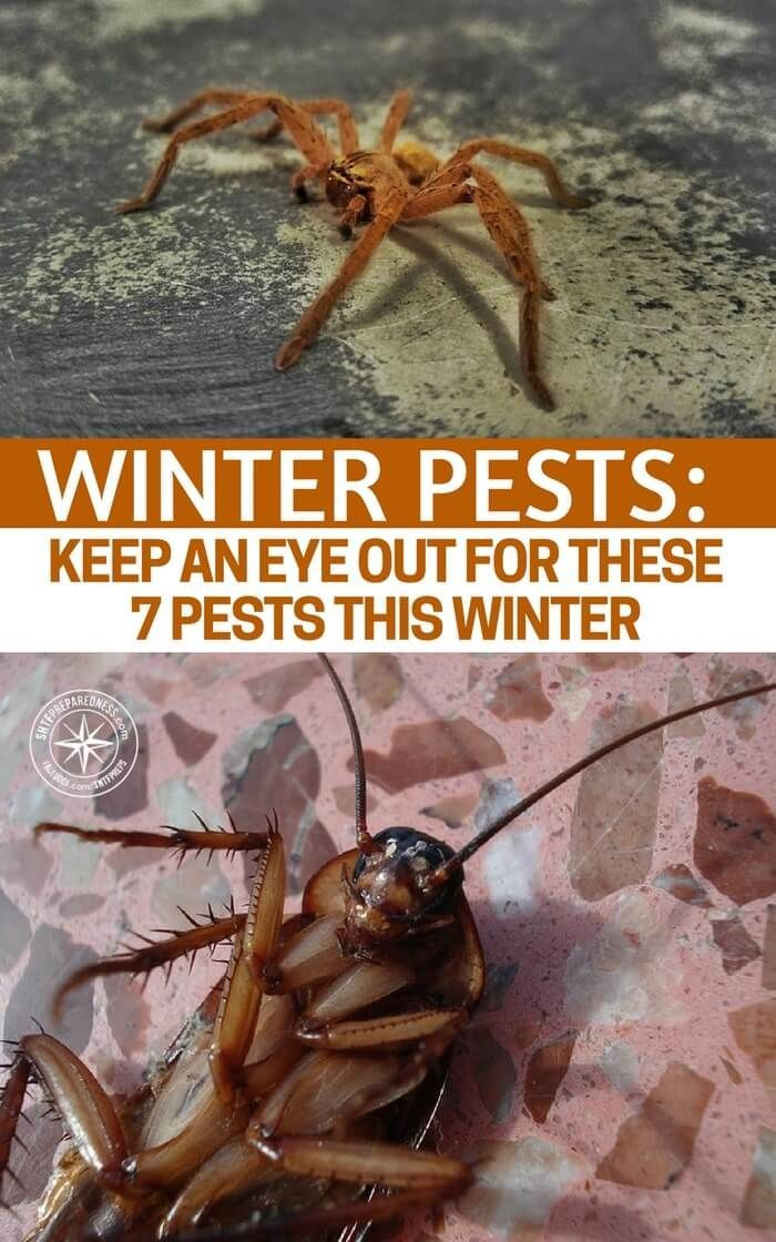 Winter Pests Keep an Eye out for These 7 Pests This