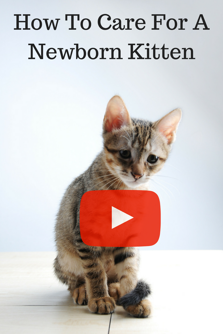 How to care for a newborn kitten. If you have found a