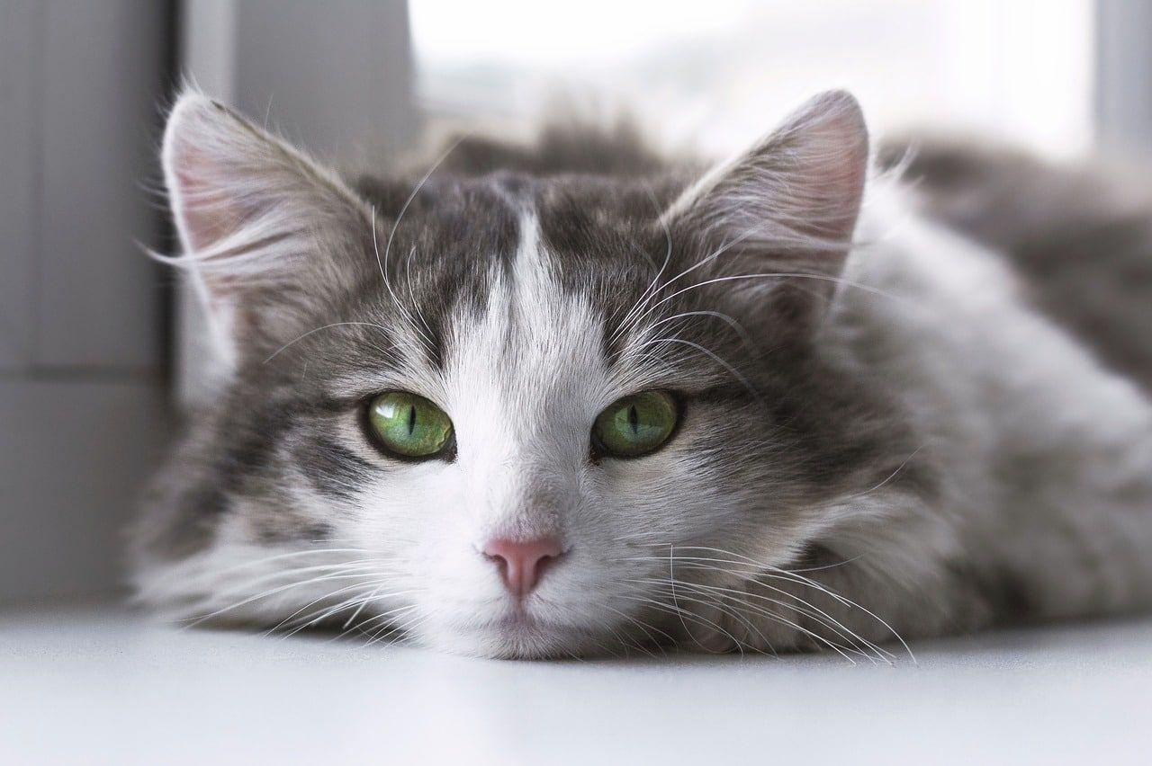 Katzenhaltung in der Mietwohnung Erlaubnis vom Vermieter