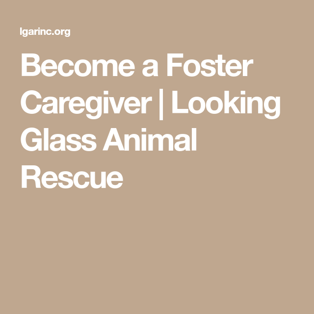 Become a Foster Caregiver   Looking Glass Animal Rescue