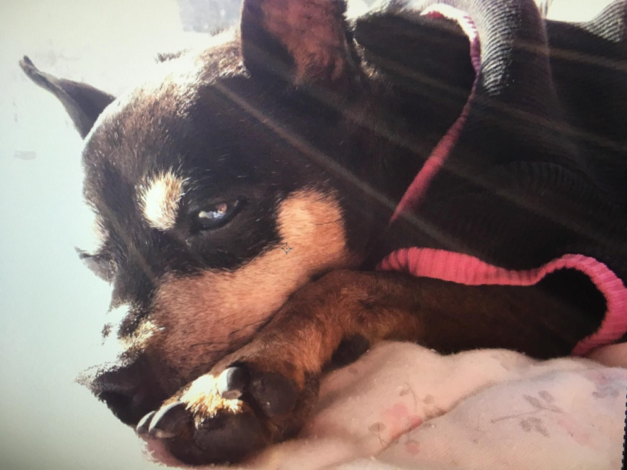 Miss you little monkey banana dogs pets dog adopt love cute