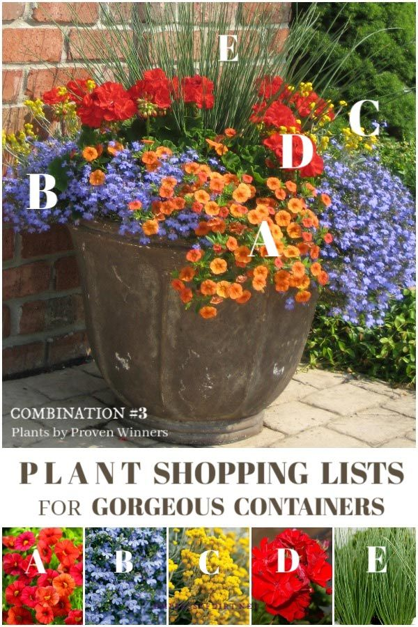 Plant List For Gorgeous Patio Planters 3 Of 3 With Images