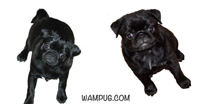 Pop Quiz Which One Is Chubbs And Which One Is Ms Worldwide