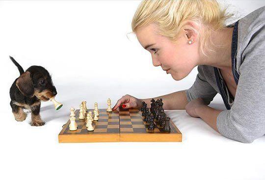 Let the puppy win http://ift.tt/2pdyQ9z