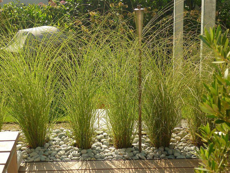 Photo of Jörg Kaspari – landscape architect – grass hedge for easy …