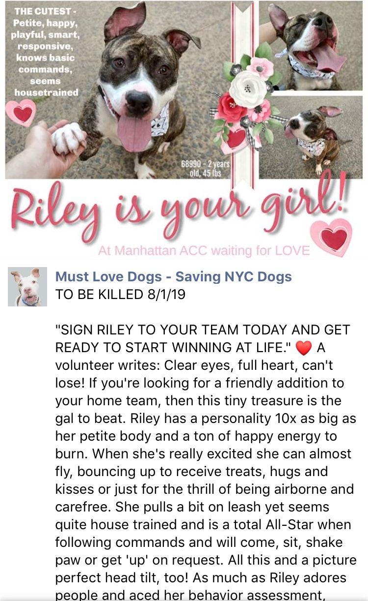 Precious Wonderful Riley Relisted To Die 8 1 19 Ij2 Nyc