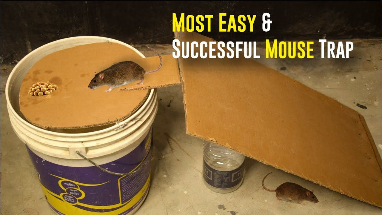 Bucket mouse trap most easy and successful mouse trap