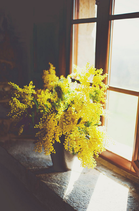 I love the cool scent of mimosa. It always reminds me of my Grandma.