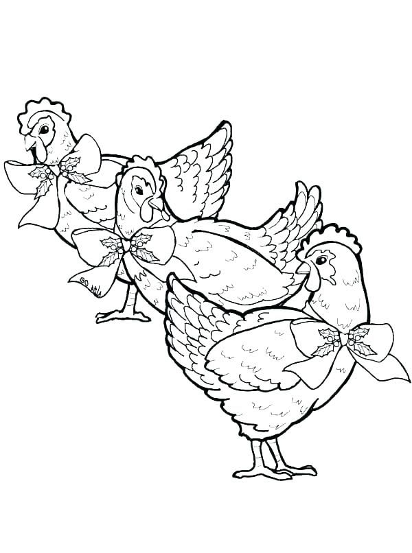 baby chick coloring pages  chickens are animals that are