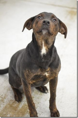 Adopt Kennel 04 on Doberman mix, Find pets, Animal throws