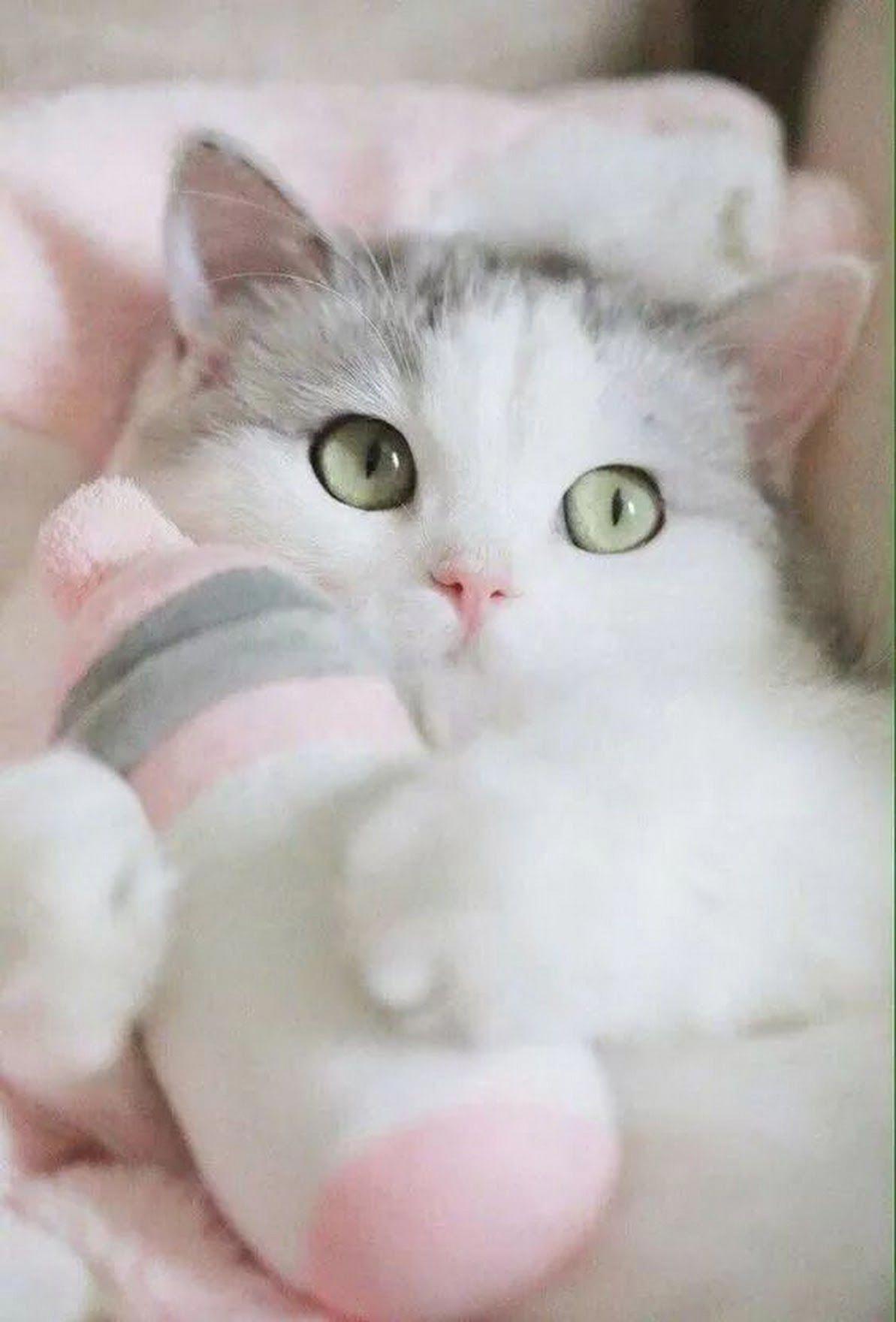 Cute Baby Kittens Having Fun Cute Cat Gif Beautiful Kittens