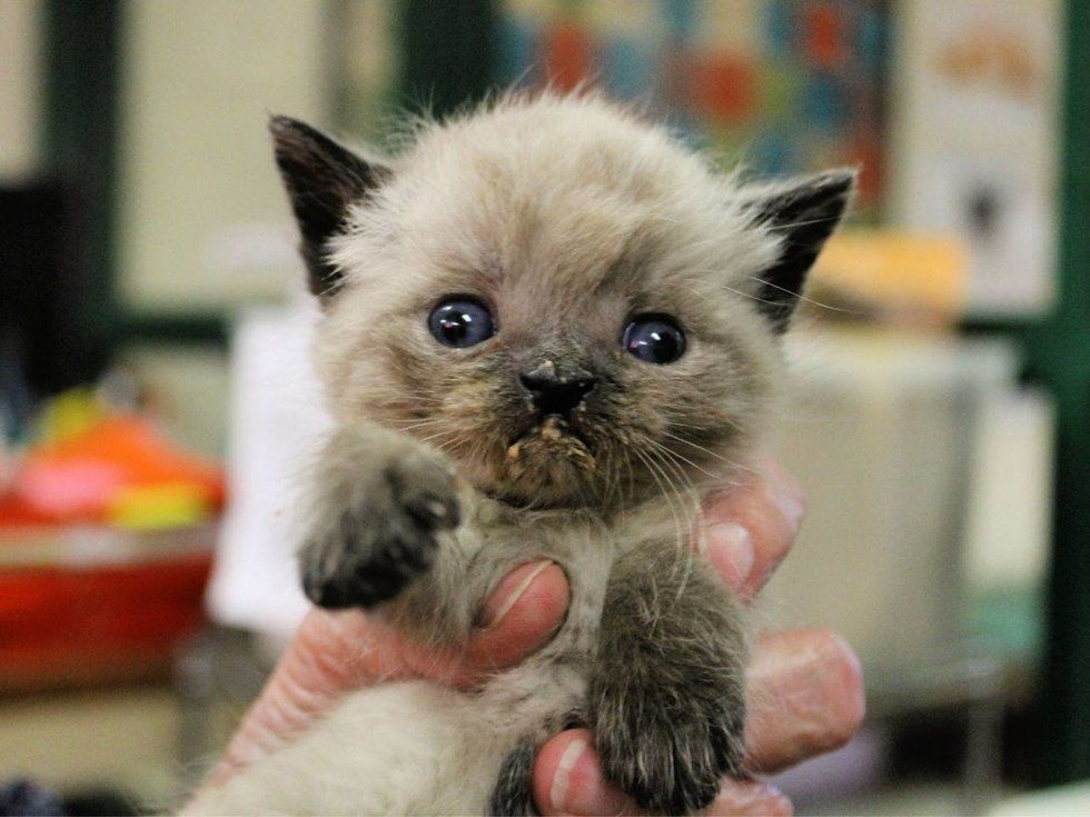 Kitten Born Special Is So Happy When He Finds Someone Who Won T Give Up On Him Kittens Kitten Love Cat Adoption