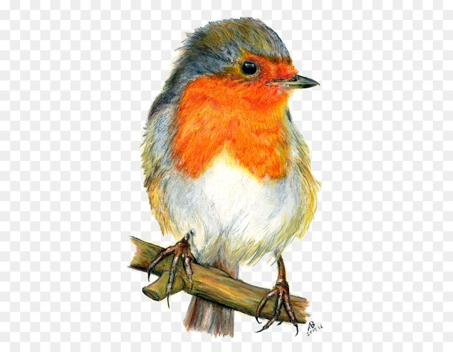 European Robin Bird Drawing Watercolor Painting Watercolor Animals Png Is About Is About Perching Bird Watercolor Bird Drawings Painting Purple Art Abstract