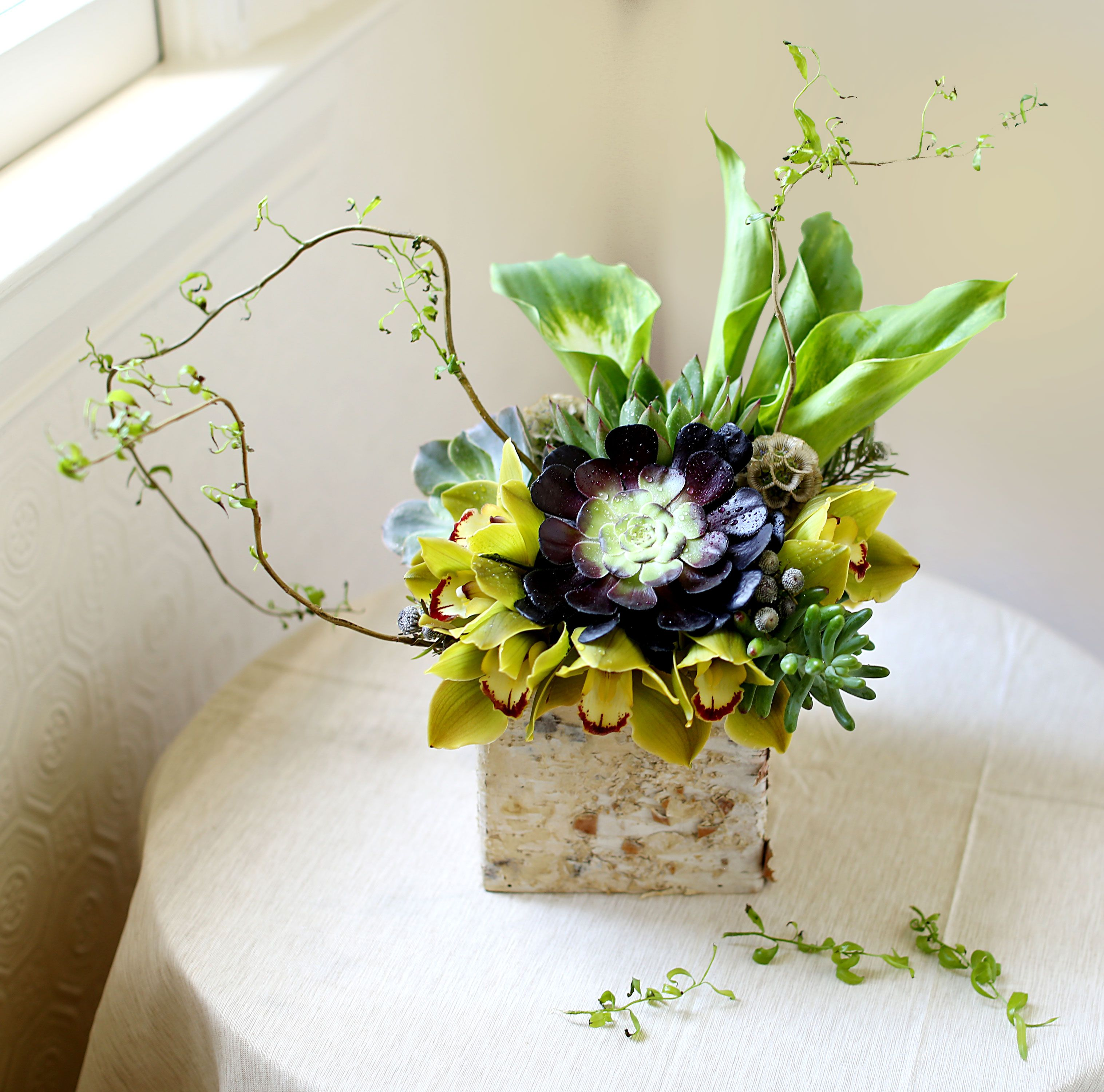 Aeonium Succulents Arrangements With Cymbidium Orchid Curly Willow Tip Calla Lilly Leucodendron Scabio Succulent Arrangements Cymbidium Orchids Zebra Plant