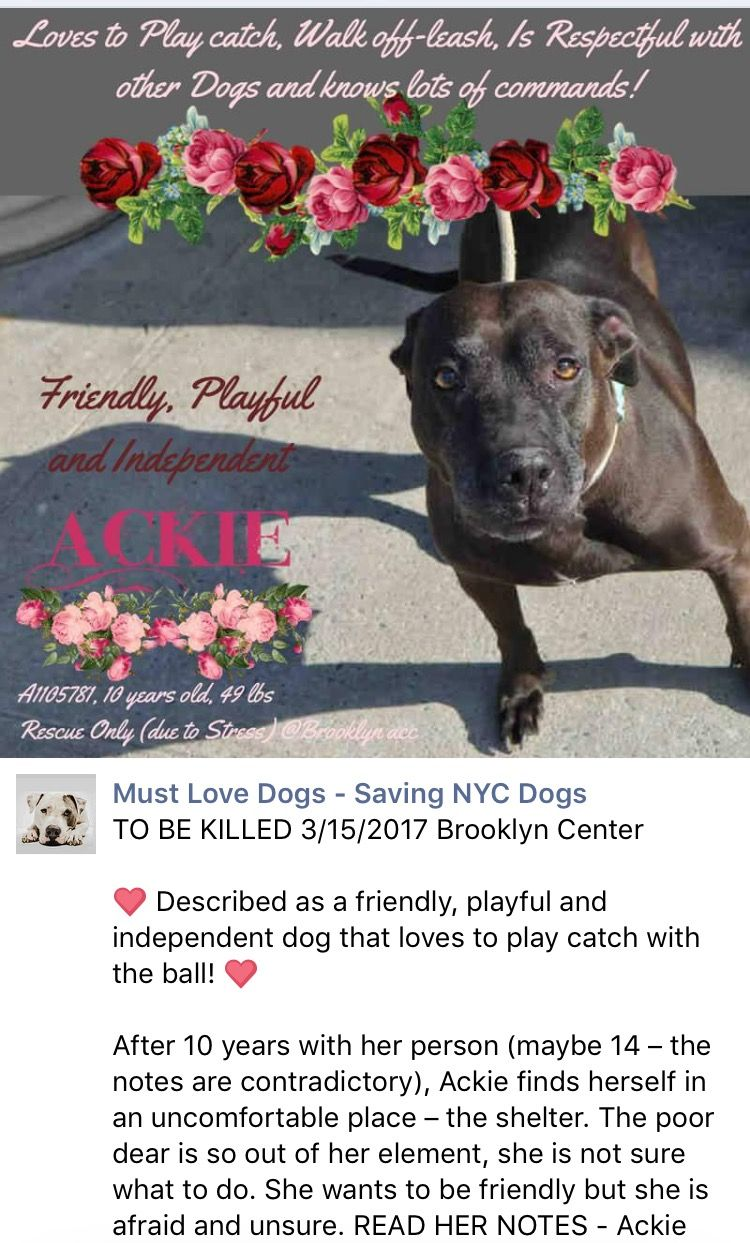 MURDERED💔💔 I'M SO VERY SORRY PRECIOUS GIRL💔 YOUR LIFE SHOULDN'T ENDED LIKE THIS AND I'M DEVASTATED❤️ 3/15/17 THIS WONDERFUL BEAUTY IS GOING TO DIE DUE HER BEHAVIOUR DURING 5 DAYS IN THE NYCACC HELL!! ONCE AGAIN JUST 1 PHOTO ON PROFILE! RESCUE ONLY OF COURSE! PLEASE WORK WITH A RESCUE AND SAVE HER! /IJ Brooklyn Center My name is ACKIE. My Animal ID # is A1105781. I am a female black am pit bull ter mix. The shelter thinks I am about 10 YEARS old. I came in the shelter as a STRAY on…