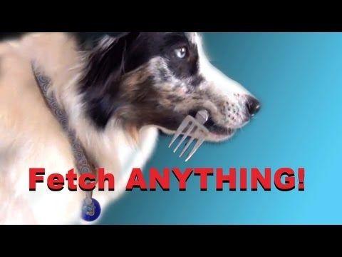 Teach Your Dog To Fetch Anything Clicker Dog Training Tricks