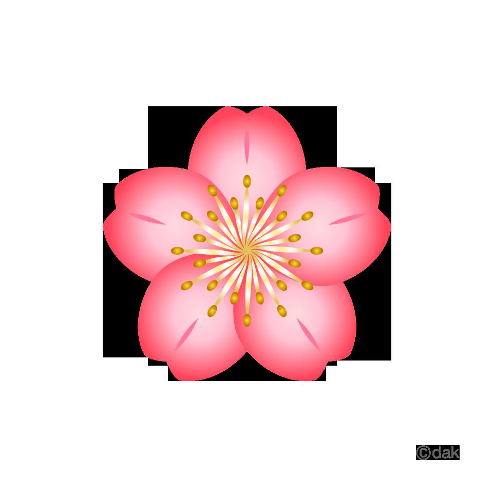 Flowersakuragradationg 960960 vectores pinterest icons flowersakuragradationg 960960 mightylinksfo Choice Image