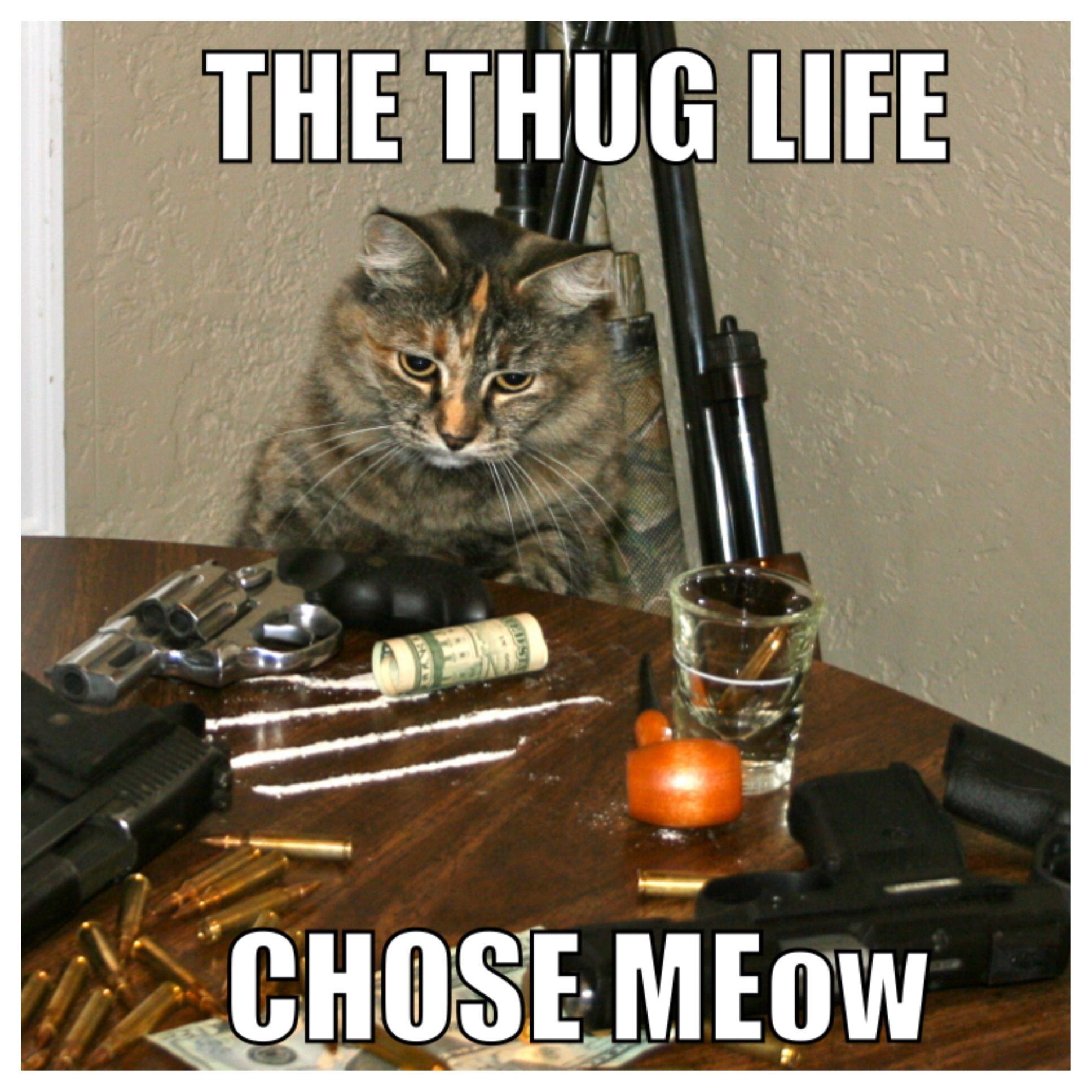 Trap Cat #Cat #Funny #Guns #Badass #Meme