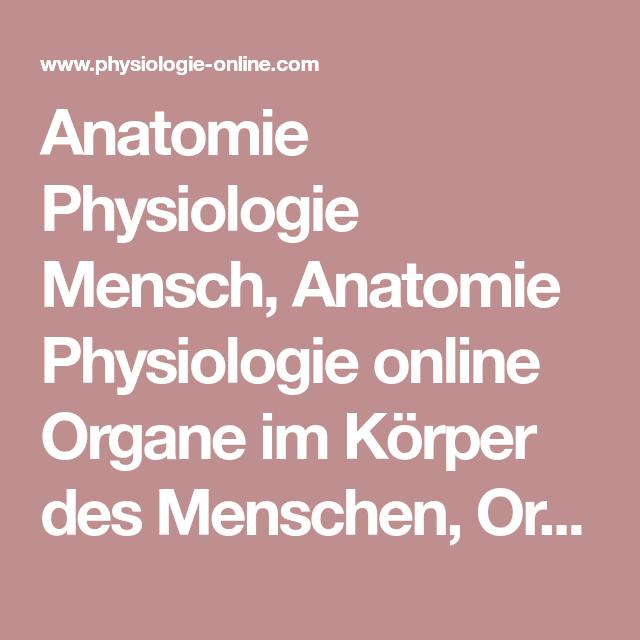 Anatomie Physiologie Mensch, Anatomie Physiologie online Organe im ...