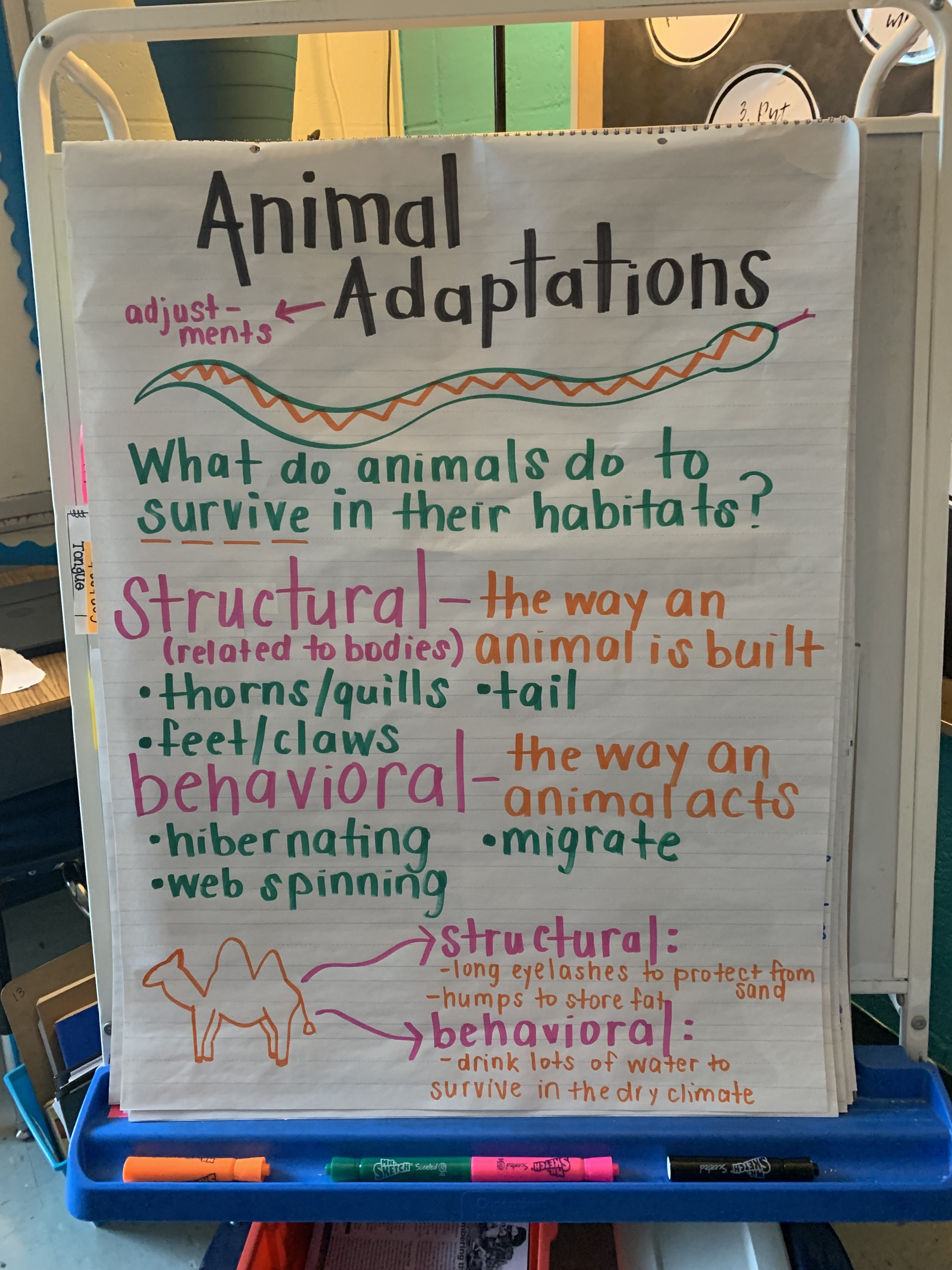 Animal Adaptations Anchor Chart 3rd Grade In With