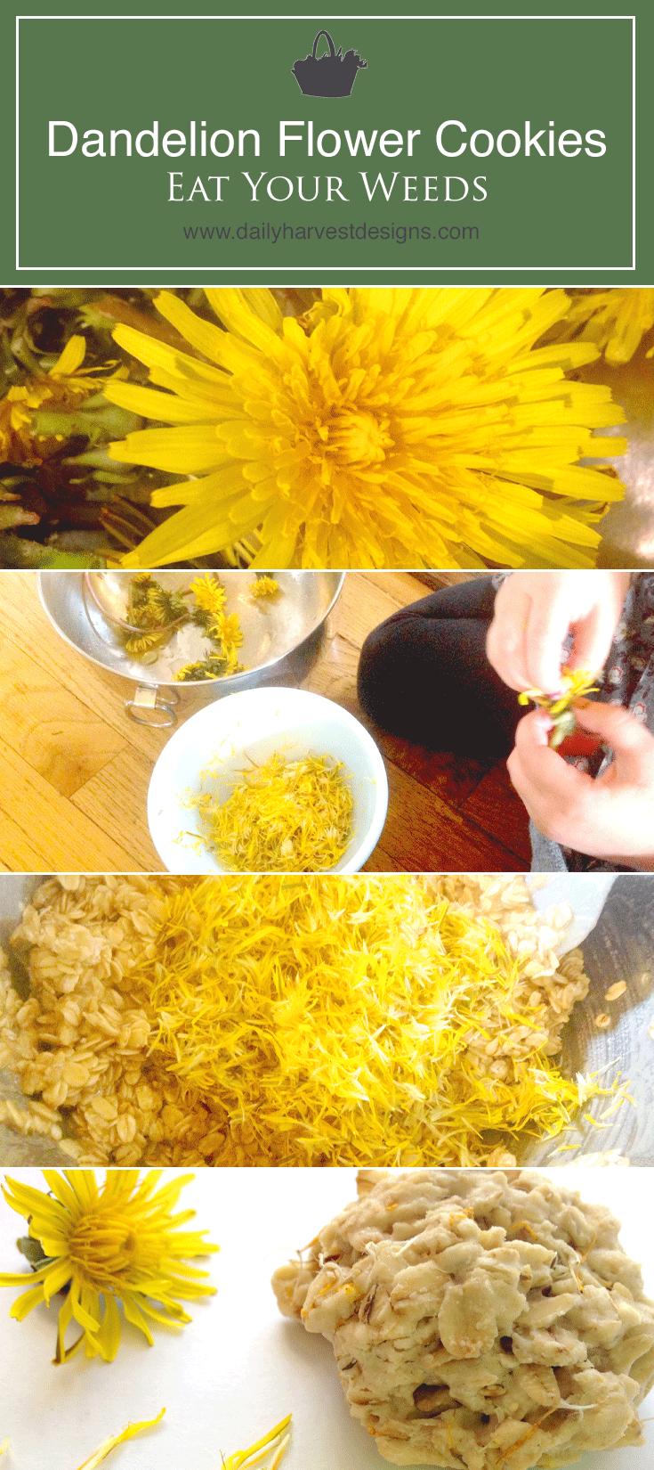 How To Make My Favorite Dandelion Flower Cookies Dandelion Recipes Recipes Food